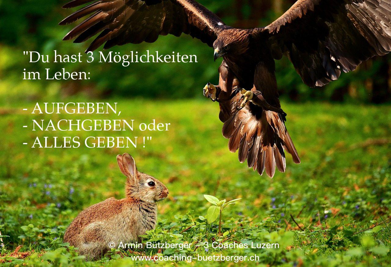 Du hast 3 Möglichkeiten im Leben: Aufgeben, nachgeben oder alles geben! Spruch Armin Bützberger