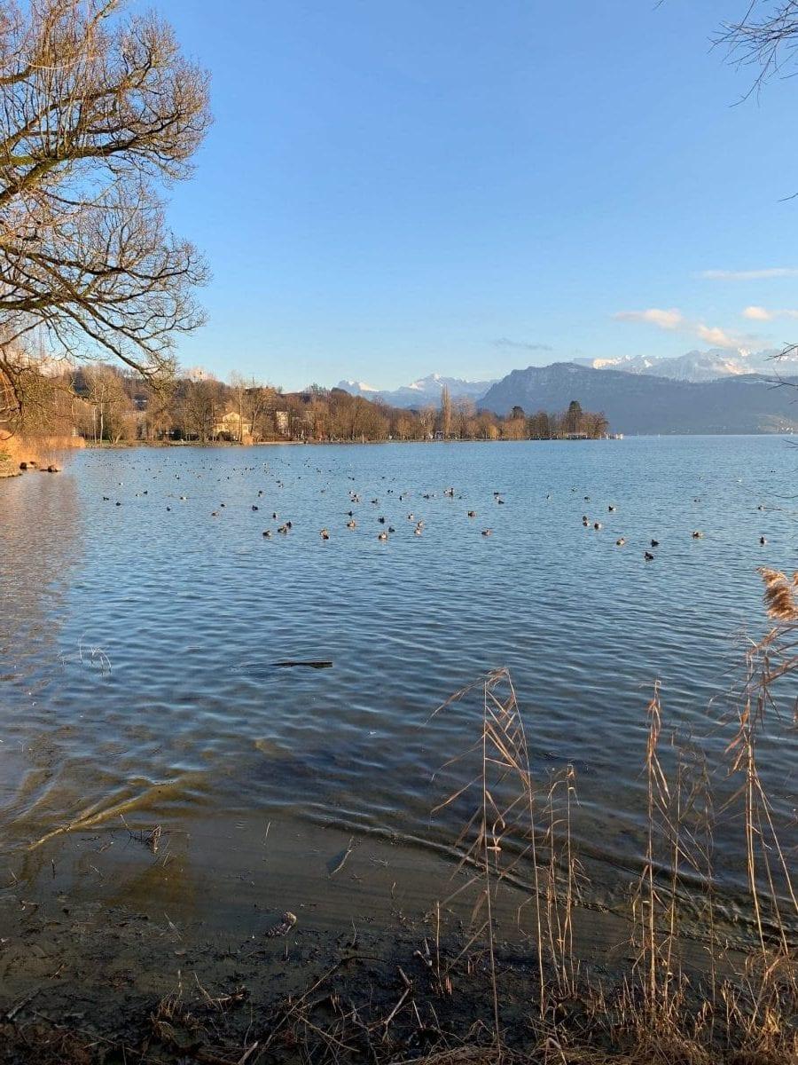 Januar 2019 Impressionen aus Luzern am Vierwaldstättersee