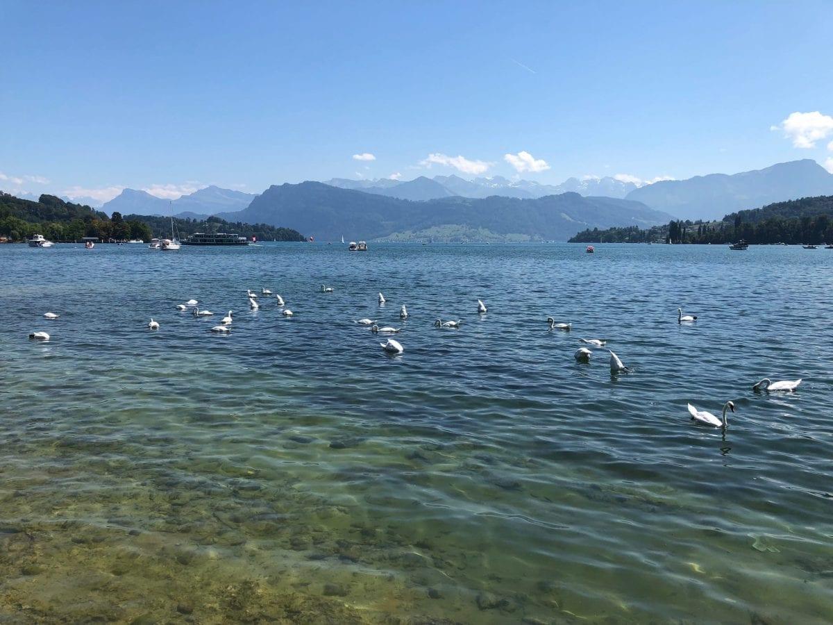 Herausforderungen meistern mit Coaching bei Armin Bützberger in Luzern