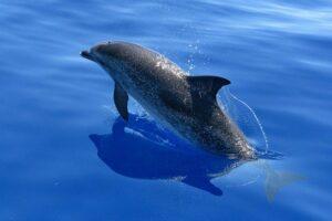 Der Delfin als Krafttier - Element Wasser | Lebensfreude - Optimismus, Zuversicht, Leichtigkeit und positive Energie