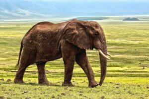 Der Elefant als Krafttier - Element Erde | Weisheit - Glück, Frieden, Geduld, Kraft und Führung in deinem Leben